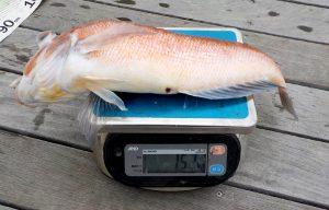 釣人:増川日出男様